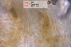 DSC_4598-5