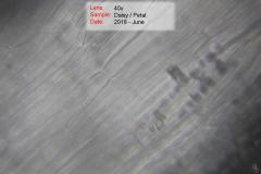 DSC_4522-6